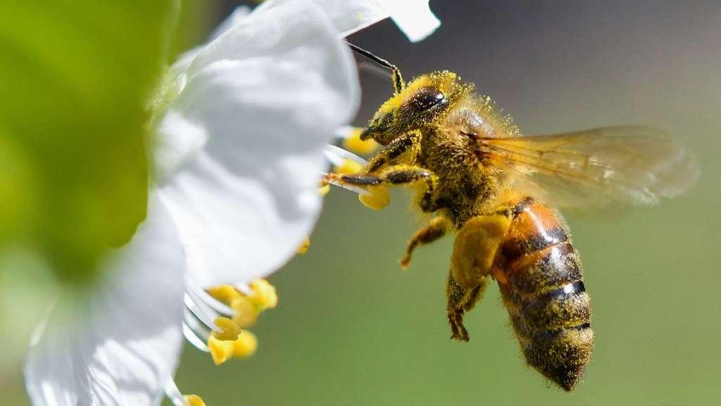 volksbegehren bienen münchen
