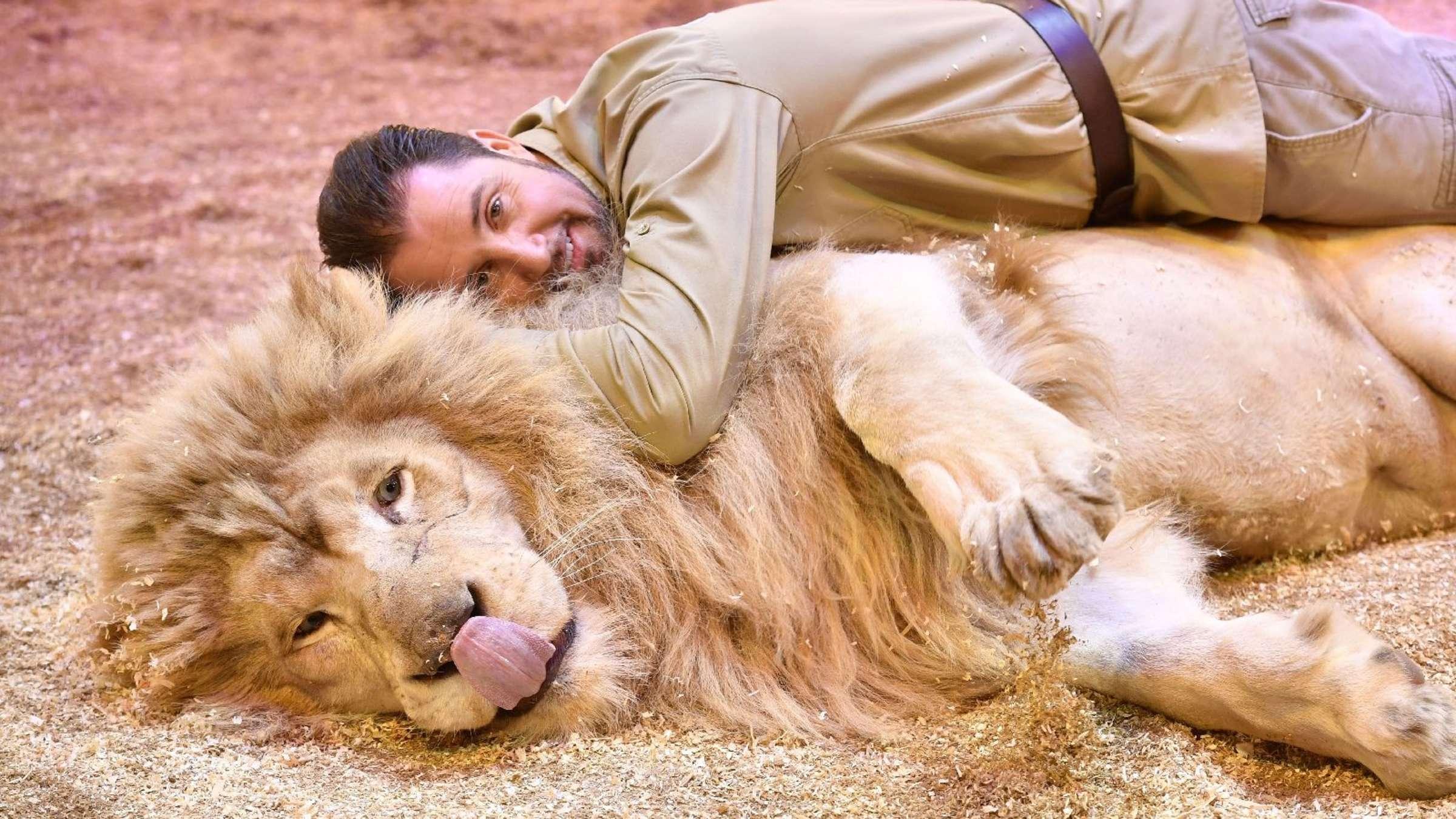 Löwe mann nicht verliebt